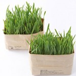 無印良品の「猫草栽培セット」、安くてネコにも大人気!