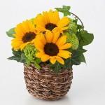 父の日に無印のお花はいかが?初夏にぴったり♪