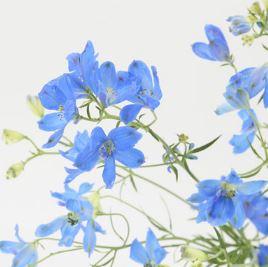 muji-flower1