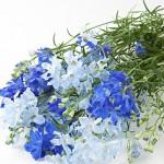 素敵!無印の限定品「デルフィニウム」の花束