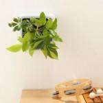 気になる!無印良品の「壁掛けグリーン」がオシャレ